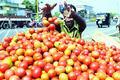 Rising tomato price disturbs kitchen budget across metros : Survey