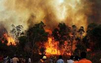 Uttarakhand fires: 7 dead, 2269 hectares of green cover destroyed; Rajnath reviews situation
