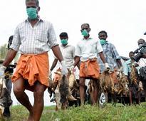 Bird flu in Kerala due to H5N1 virus