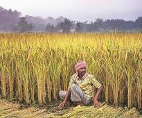 Budget 2018: Agri-credit likely to increase to Rs 11 trn for better flow