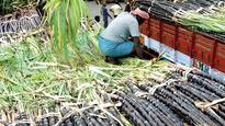 Despite Farmer Suicides, Karnataka Government Sets July 31 Deadline for Paying Sugarcane Dues