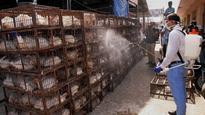 Alarmed Centre seeks bird flu report from states
